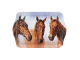 """Ashdene Taca średnia 89268 """"konie folbluty"""""""